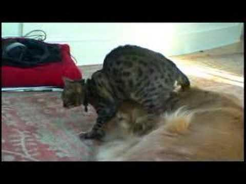 Jokes - Cat Gives Dog A Head Massage