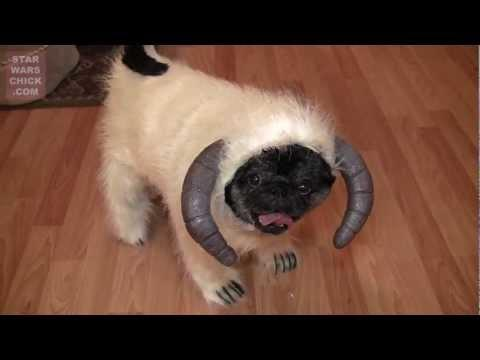 Cute - Dog Wears Hoth Wampug Costume