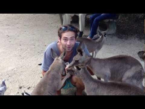 Cute - Guy Feeds The Kangaroos