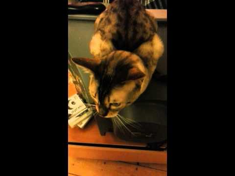 Jokes - Cat Talks With The Owner