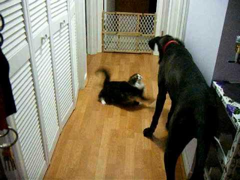 Jokes - Cat Starts A Fight With A Big Dog