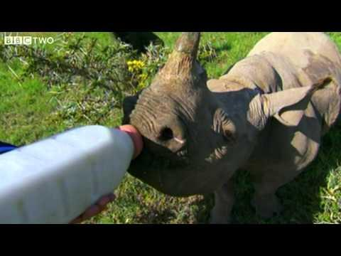 Cute - Bottle Feeding A Baby Rhino