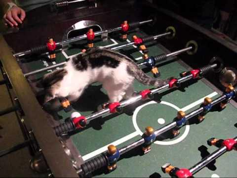 Cute - Cat Plays Foosball