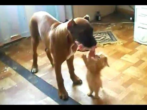 Kitten Wants The Dog To Share The Food