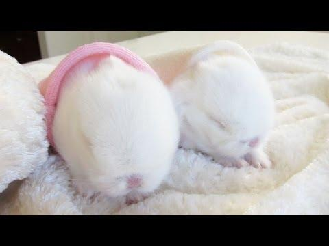 Adorable Baby Bunnies