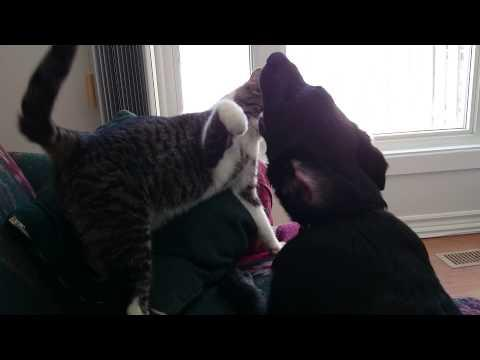 Play Fighting Cat And Dog