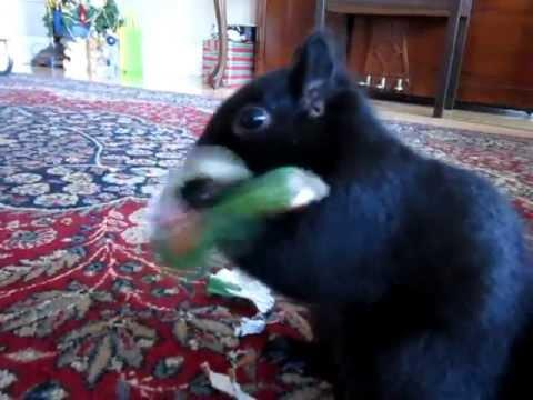 Cute - Squirrel Gets A Christmas Gift