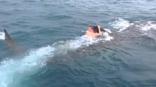Crazy Guy Rides The Whale Shark