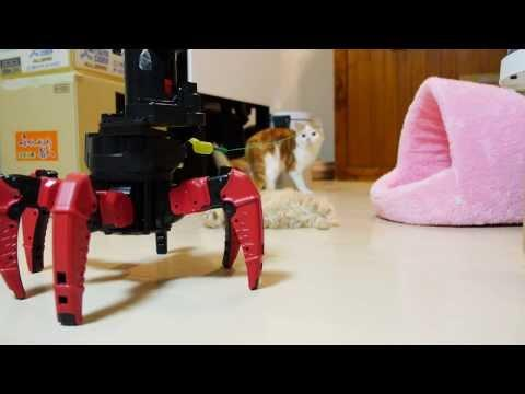 Combat Robot Vs The Kittens