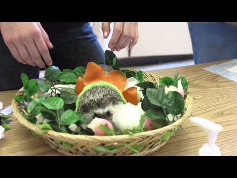 FAIL - Halloween Costumes For Hedgehogs