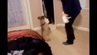 Funny And Cute Dog Discovers The Mirror