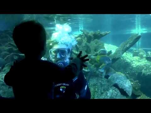 Cute - Baby Boy Plays With Scuba Diver At Aquarium