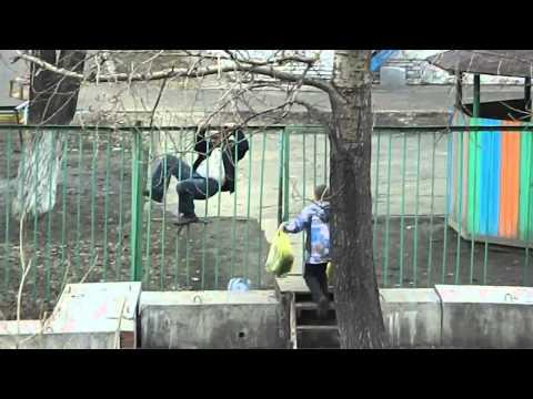 Drunk Russian Climbing The Fence - Fail