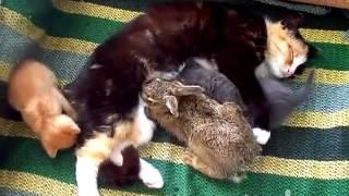 Baby Bunny Adopted By Cat