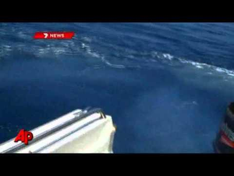 Crazy - Shark Attacks A Fishing Boat