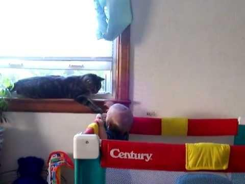 Cute - Baby Plays With The Cat