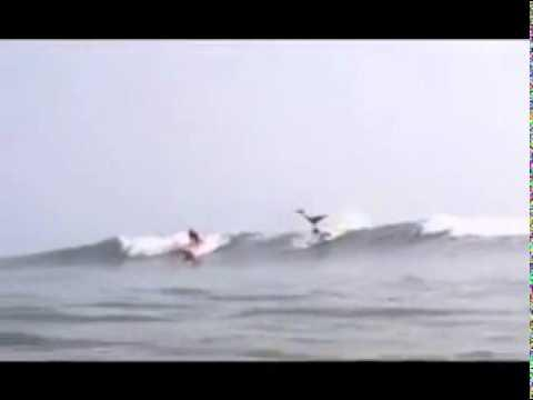 Shark - Spinner Shark Jumps Over Surfer