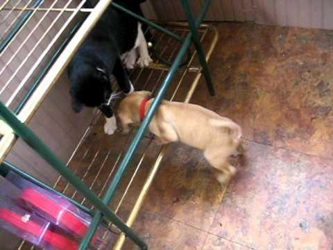 Cute - Puppy Plays With The Cat