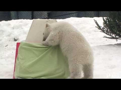 Cute Polar Bear Cub From Toronto Zoo Reveals His Name
