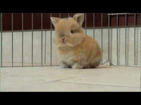 Cute - Cutest Baby Bunny