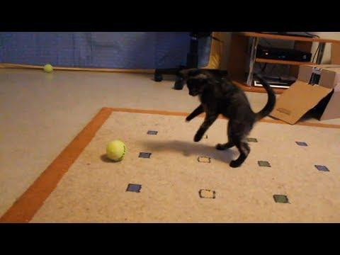 Kittens Discover Tennis Ball