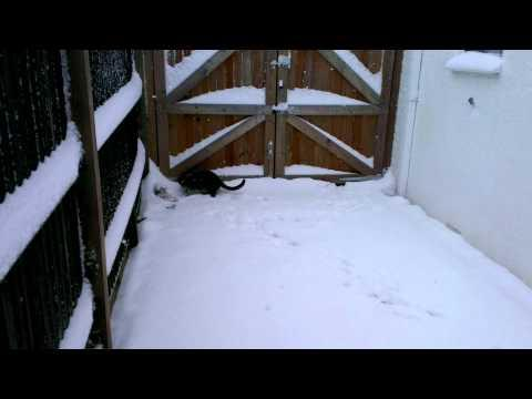 Cute - Cat Plays In The Snow
