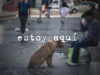 Chilean College Students Make Stray Dogs Stand Out
