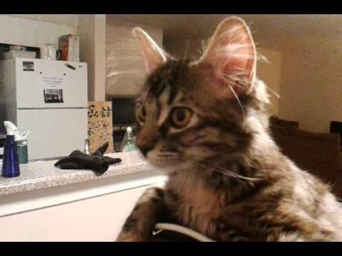 Jokes - Cat Likes To Sit On Guy's Head